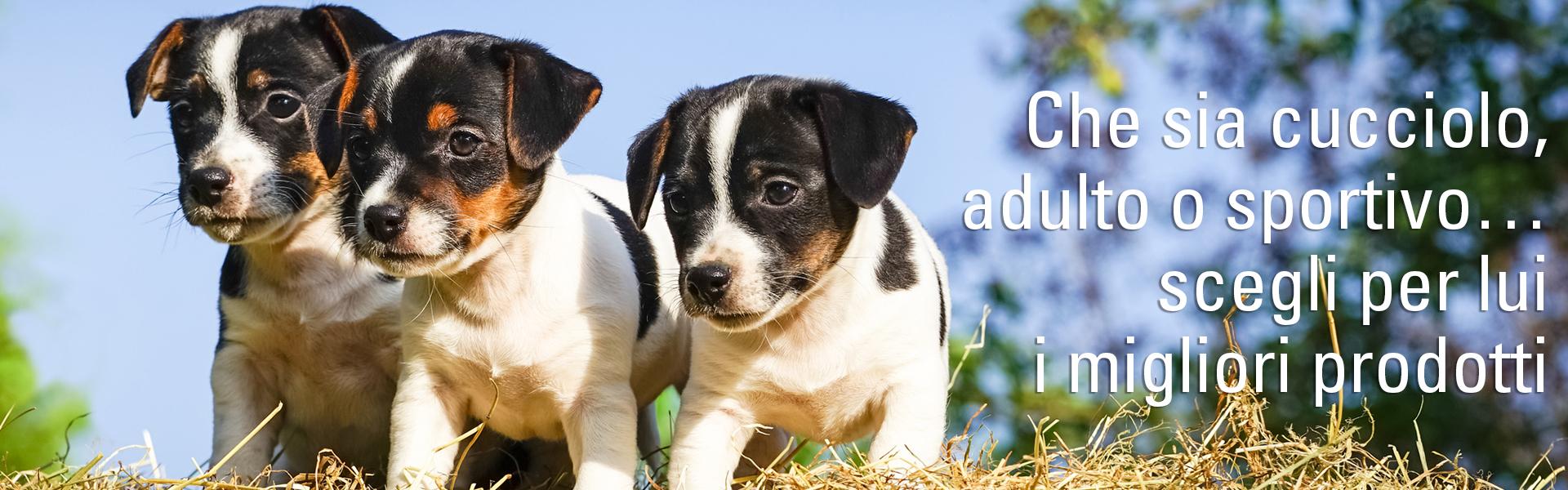 Che sia cucciolo, adulto o sportivo… scegli per lui i migliori prodotti